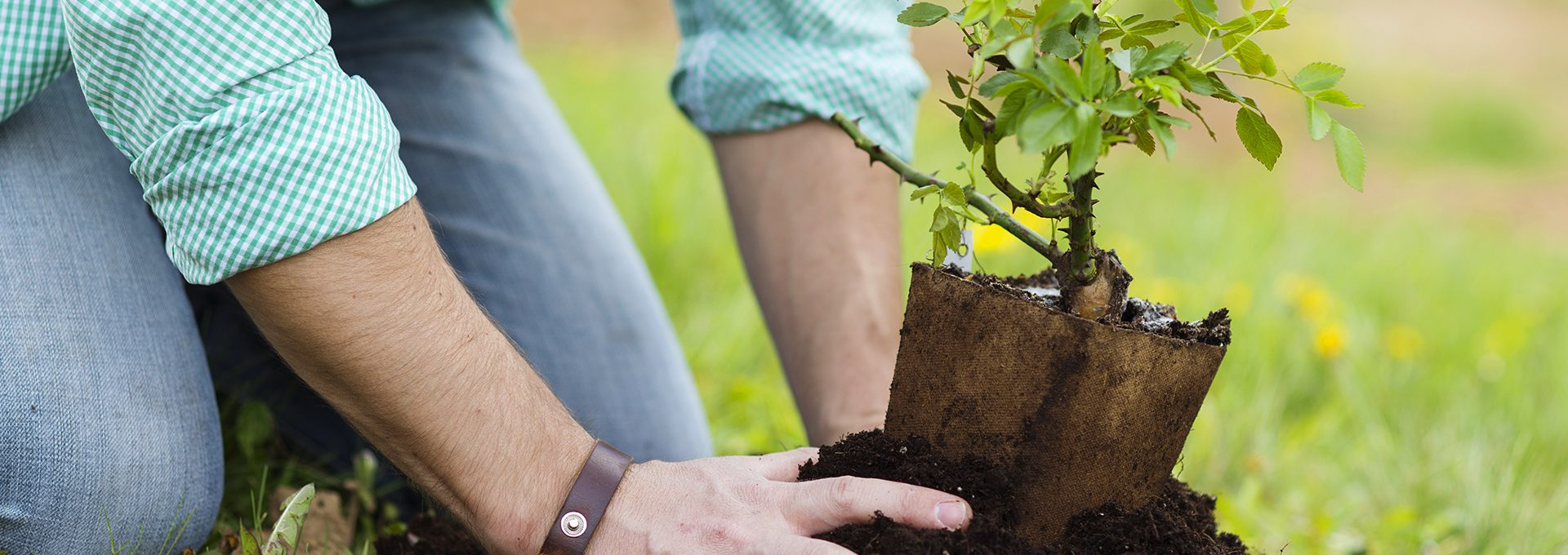 5 Easy Tips to Go Green in College
