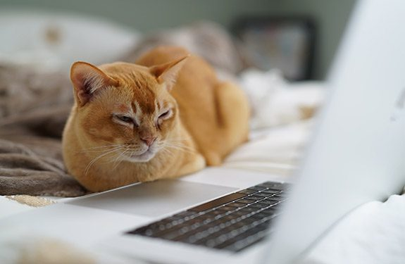 Cat sitting on bed looking at laptop screen