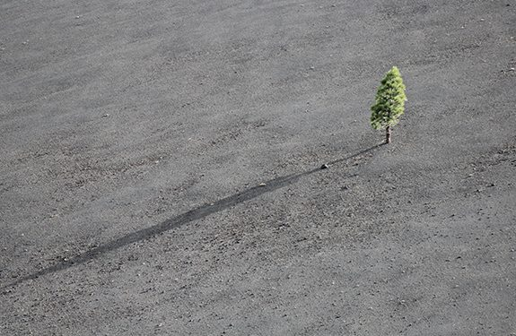 A single tree symbolizing a student feeling lonely